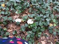 Foto bij herfst