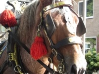 Foto bij paard en wagen
