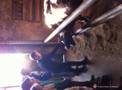 Foto van album Zorgboerderij